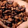 Proprietà e benefici delle fave di cacao